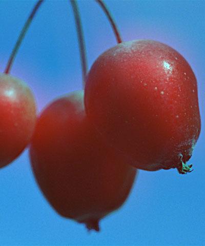 blur.red