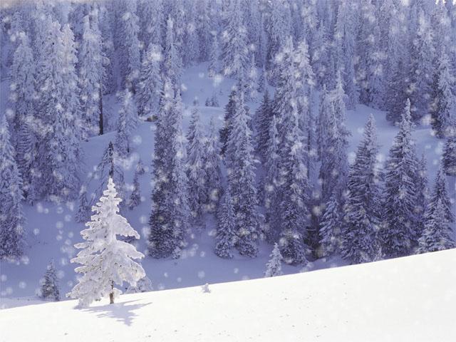 snow.comp.depth.50