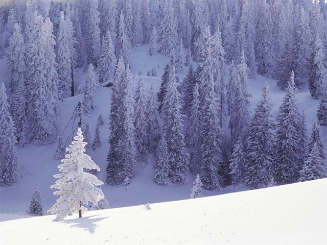 snow.original